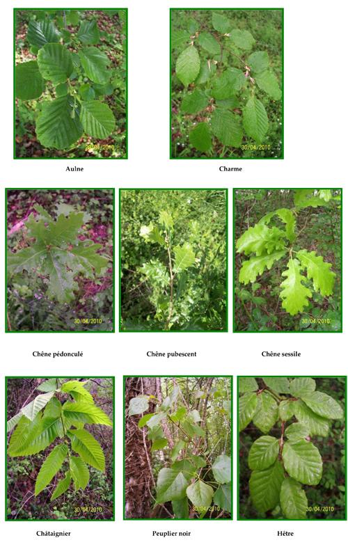 Une grande diversité phytogéographique arborée