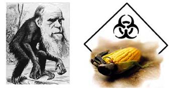 Evolution, génétique et biodiversité