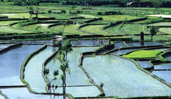 Stratégie de l'eau et sécurité alimentaire mondiale